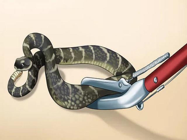 Giải mã giấc mơ đánh chết rắn? Nằm mơ đánh chết rắn đánh số mấy? 3