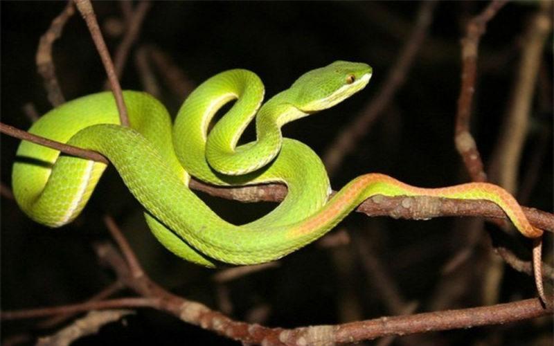 Giải mã điềm báo mơ thấy rắn xanh và nên đánh con gì phù hợp 1