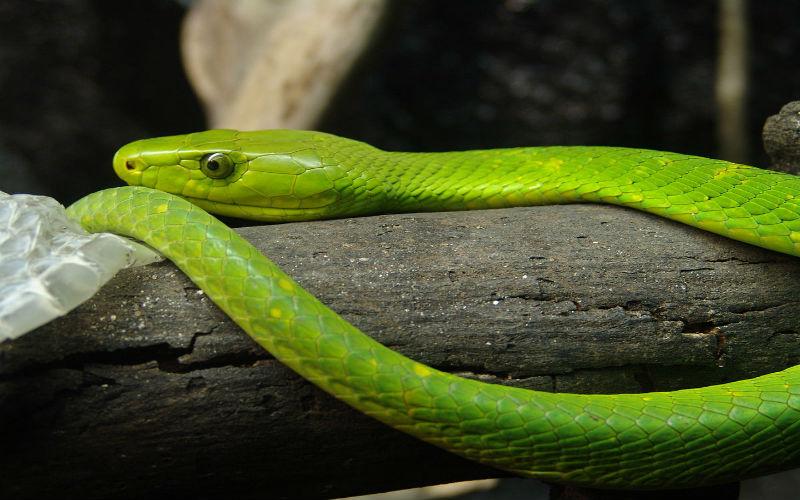 Giải mã điềm báo mơ thấy rắn xanh và nên đánh con gì phù hợp 3