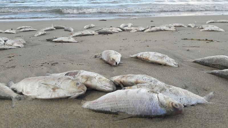 Nằm mơ thấy cá chết điềm báo gì? Con số liên quan tới giấc mơ 10