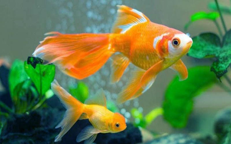 Mơ thấy cá đánh con gì? Giải mã từng tình huống và số tương ứng 1
