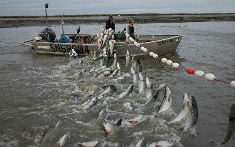 Mơ thấy cá đánh con gì? Giải mã từng tình huống và số tương ứng 17