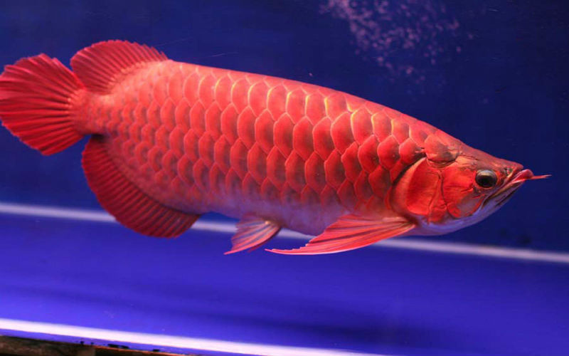 Mơ thấy cá đánh con gì? Giải mã từng tình huống và số tương ứng 19