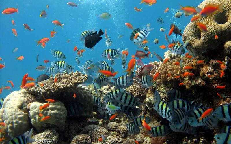 Mơ thấy cá đánh con gì? Giải mã từng tình huống và số tương ứng 3