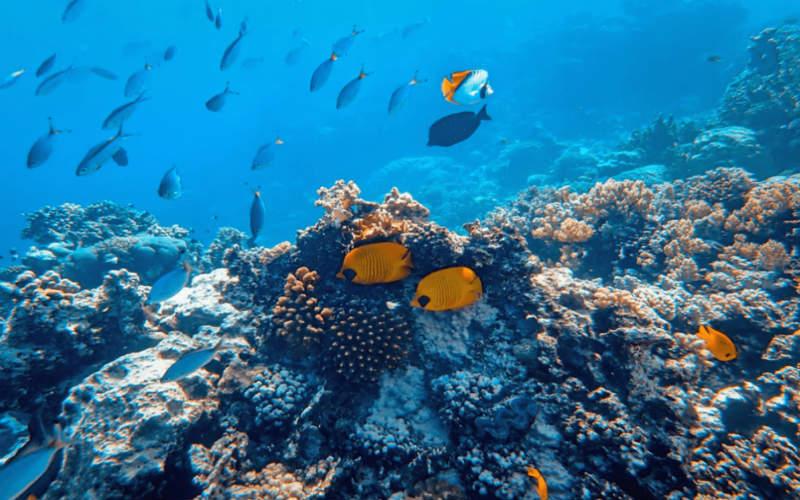Mơ thấy cá đánh con gì? Giải mã từng tình huống và số tương ứng 4