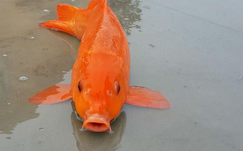 Mơ thấy cá đánh con gì? Giải mã từng tình huống và số tương ứng 5