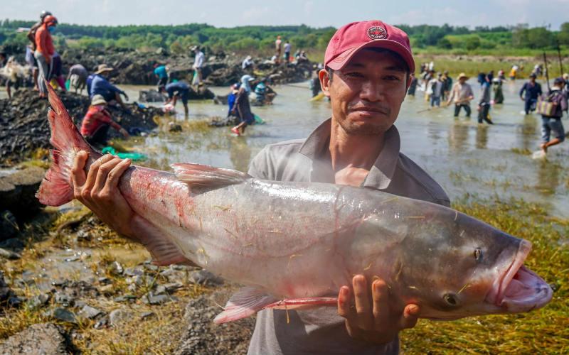 Mơ thấy cá đánh con gì? Giải mã từng tình huống và số tương ứng 6