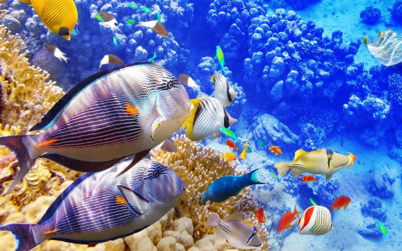 Mơ thấy cá đánh con gì? Giải mã từng tình huống và số tương ứng 10
