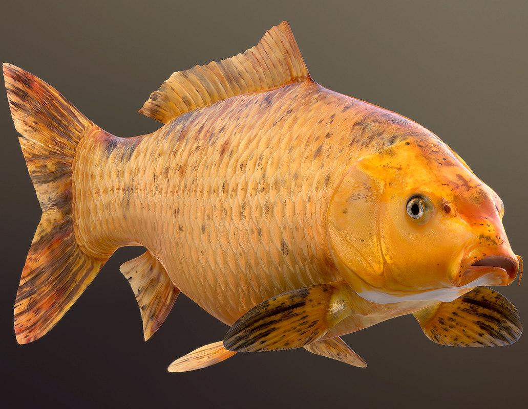 Mơ thấy cá chép có tốt không? Mơ thấy cá chép thì đánh con gì? 9