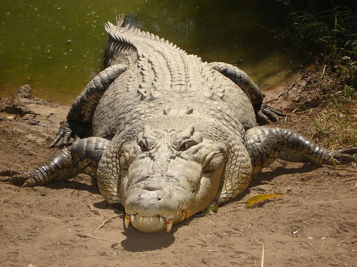 Mơ thấy cá sấu - Giấc mơ tiềm ẩn nhiều điều thú vị 8