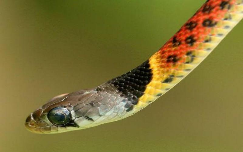 Mơ thấy rắn bị chặt đầu đánh con số nào? Điềm tốt xấu ra sao? 5