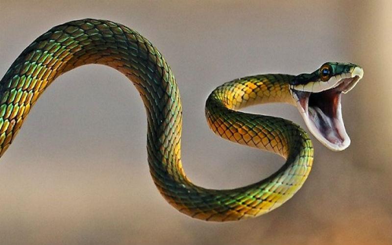 Mơ thấy rắn bị chặt đầu đánh con số nào? Điềm tốt xấu ra sao? 4