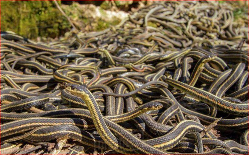 Giải mã điềm báo mơ thấy rắn chết và nên đánh con gì phù hợp 2